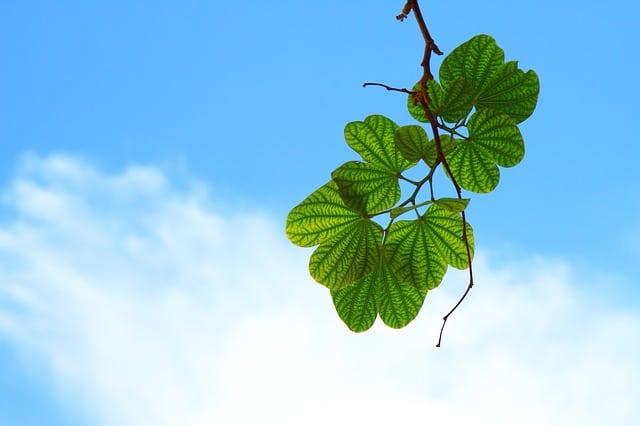 leaves-15757_640.jpg